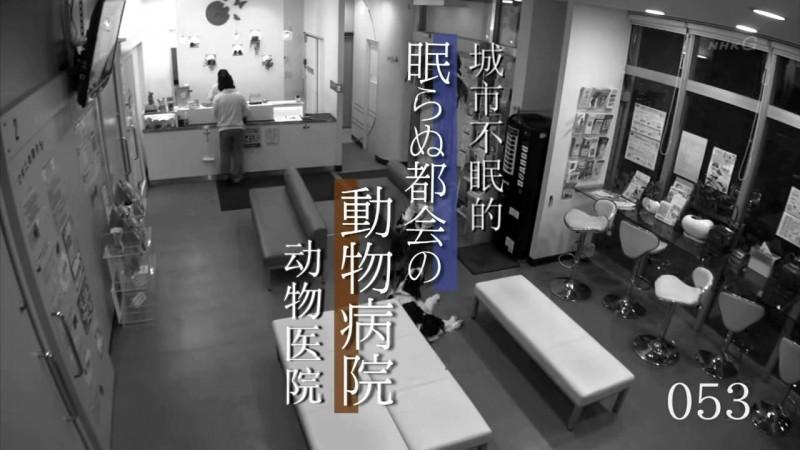 [诸神字幕组][NHK纪录片][纪实72小时][城市不眠的动物医院][中日双语字幕][720P].mkv_20150106_142956.775