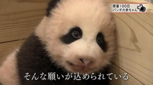 X panda.rawx_20170113213554
