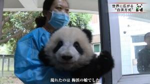 X panda.rawx_20170113213624